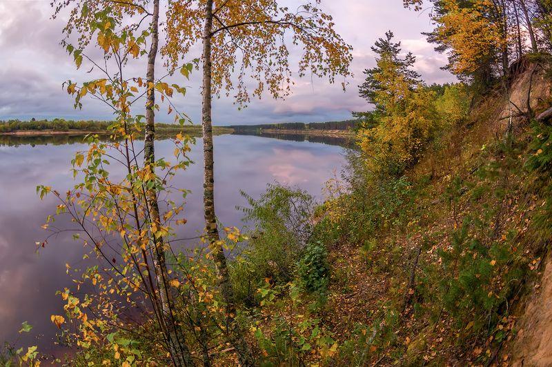березы осень река вечер листья желтый оранжевый фиолетовый осенние березки на обрыве )photo preview