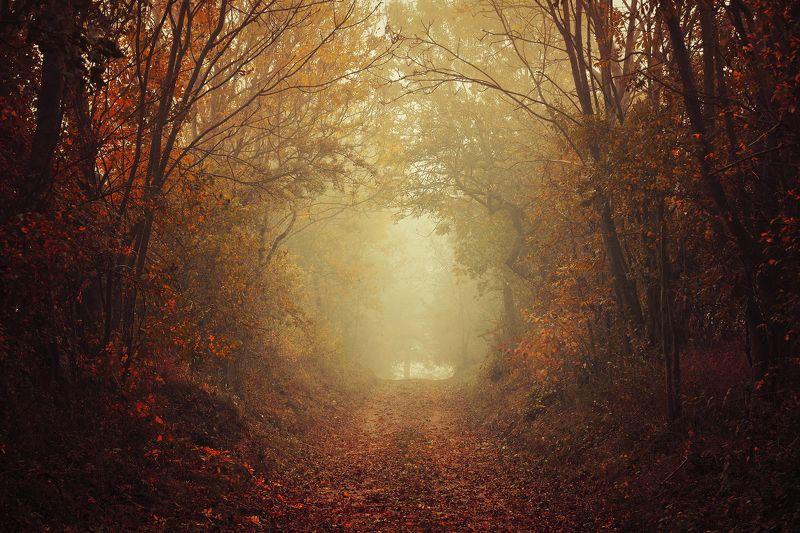 путь душ way of souls dusza red autumn path trees leaf путь душphoto preview