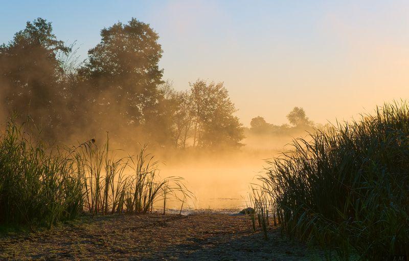 Misty, foggy, autumn, dawn, fog, morning, sunrise, озеро, осень, туман, Утро, свет ***photo preview