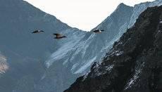 Летят утки , а два гуси задержались !