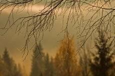 Грустная осень...