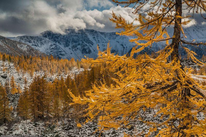 алтай, сибирь, siberia, осень, altai, тучи, fall, лиственницы, золото Золото алтайской осениphoto preview