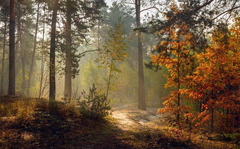 лес осень октябрь рассвет туман дубы Прелестница- осеньphoto preview