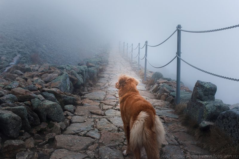 собака, горы, туман Подъем в горыphoto preview