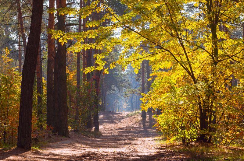 лес осень октябрь тропа туман клён Прекрасна ты во всей своей красеphoto preview