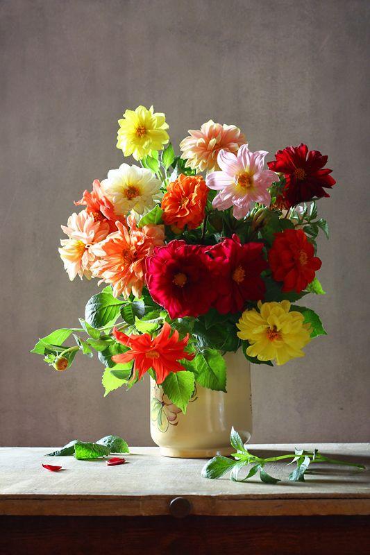 натюрморт, цветы, георгины Георгинчикиphoto preview