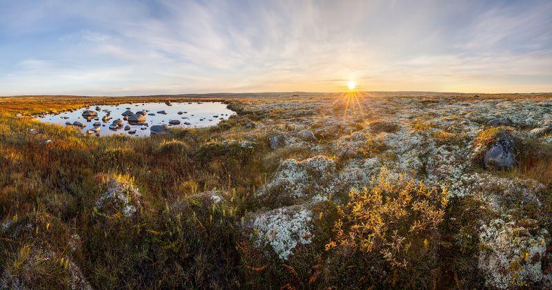 тундра, русская арктика, север, кольский полуостров, мурманская область, териберка, дальние зеленцы \