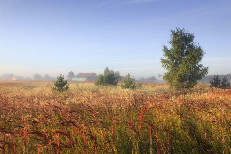 утро поле околица деревня Заросли...photo preview