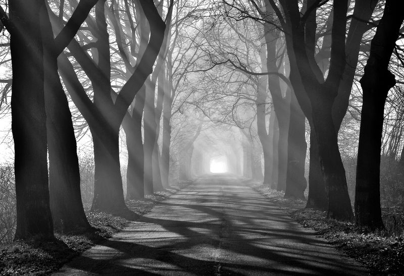 tunnel road trees tree path bw mist foggy poland Tunnelphoto preview