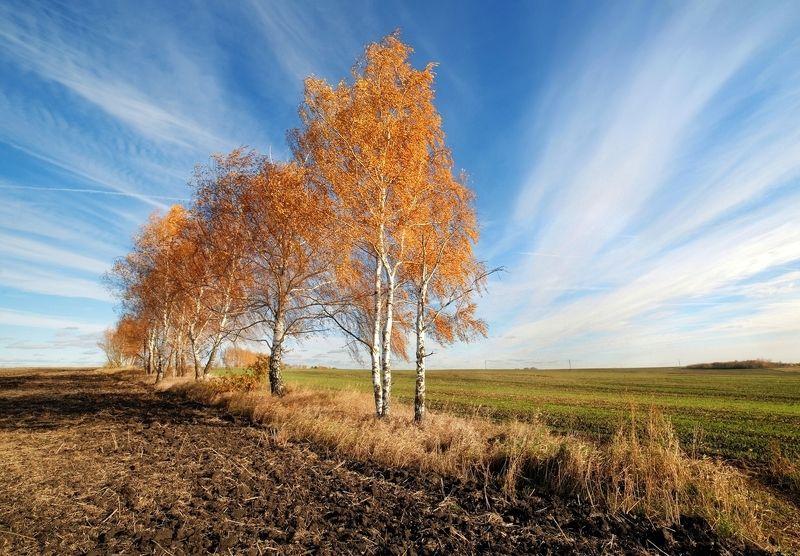 октябрь, поле, березки, тульские, просторы, 14 мм Березонькиphoto preview
