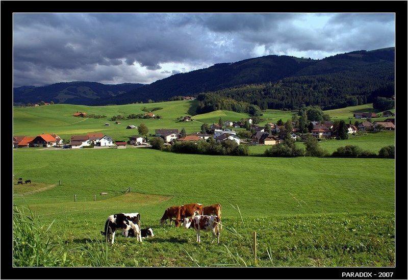 швейцария, деревня, коровы, бах, пастух, paradox \