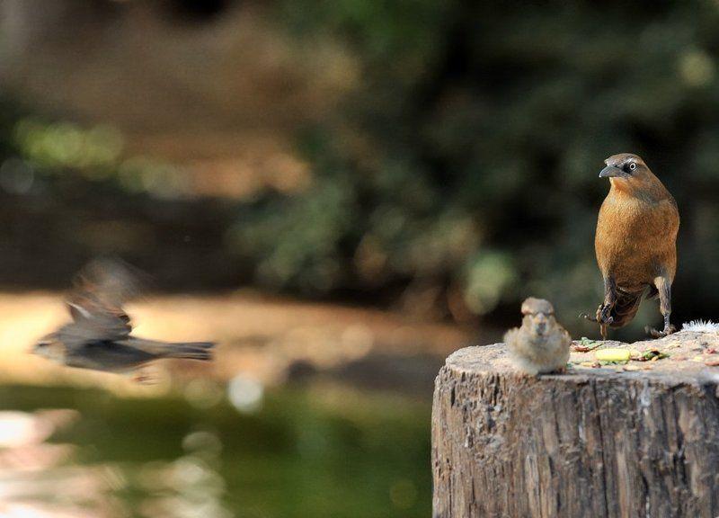 птицы, животные Бегство хулиганаphoto preview