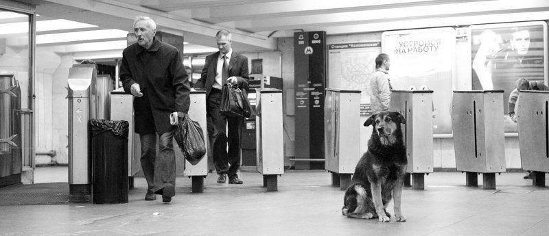 собака, пес, животные Я жду тебя!photo preview