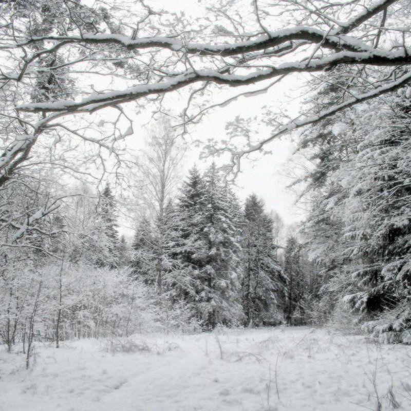 Свежий снегphoto preview