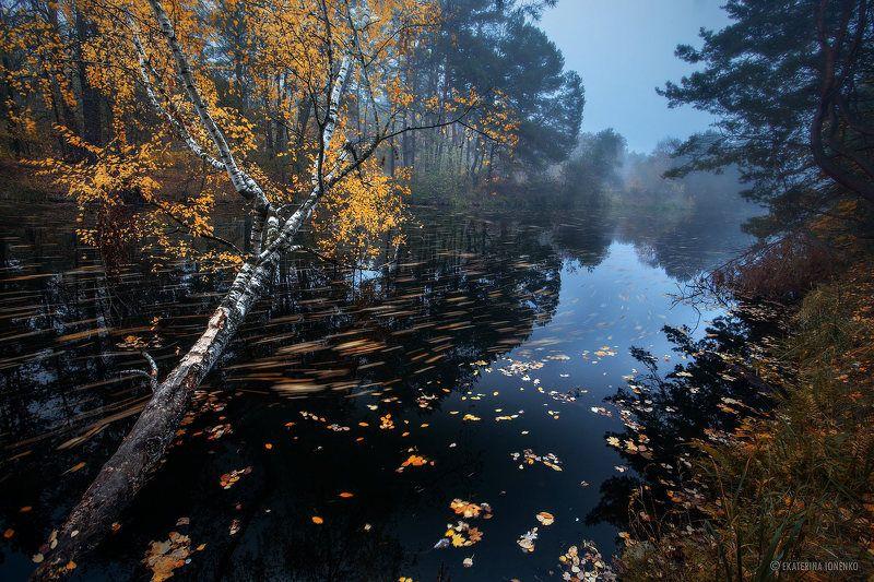 Осень рисует красоту...photo preview