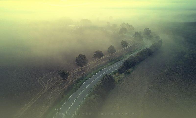 путь домой dji phantom road trees mist foggy magic curve dron путь домойphoto preview