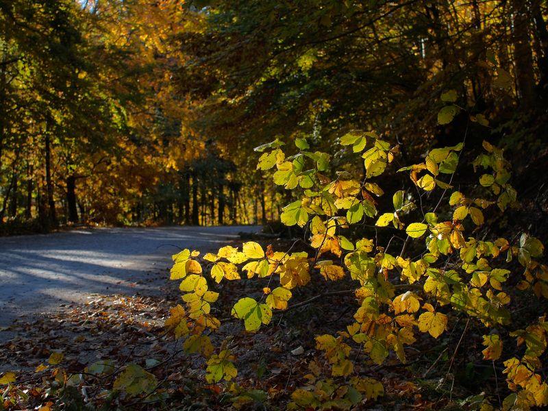 Pastel colors of autumnphoto preview