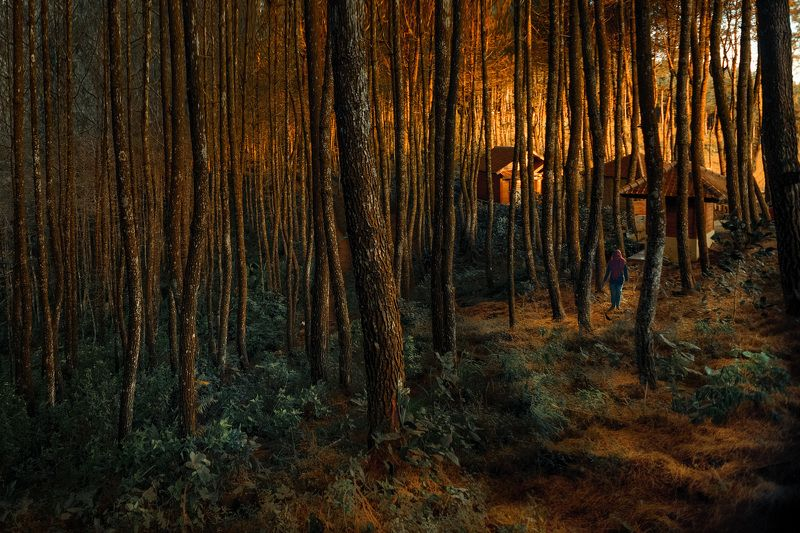 sunset, lanscape, forest, hills When the sun setsphoto preview