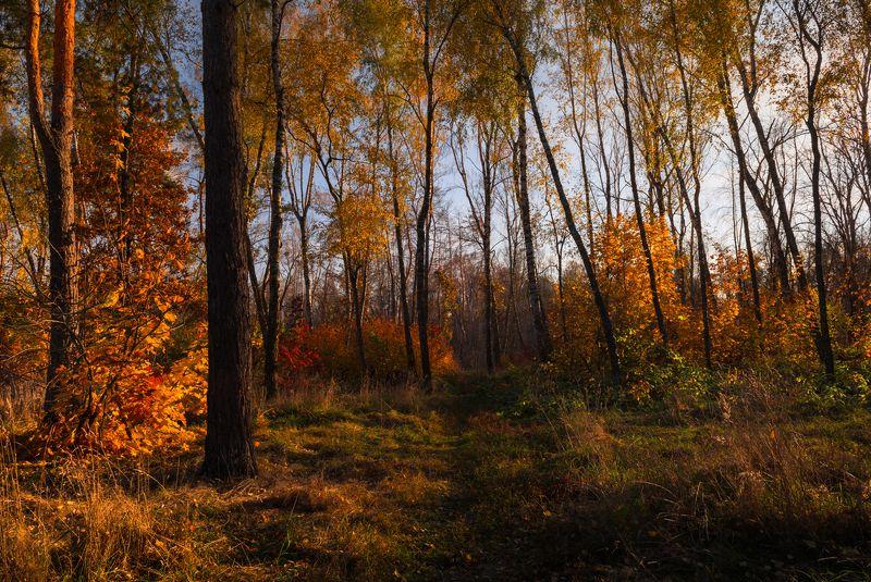 лес осень октябрь закат Осенний вечер в лесу. Октябрьphoto preview