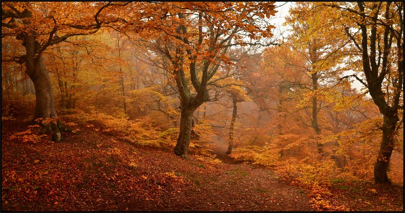 Осень у Джурлыphoto preview