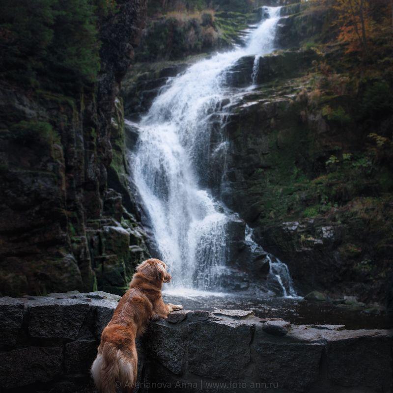 собака, природа, водопад Wodospad Kamieńczykaphoto preview
