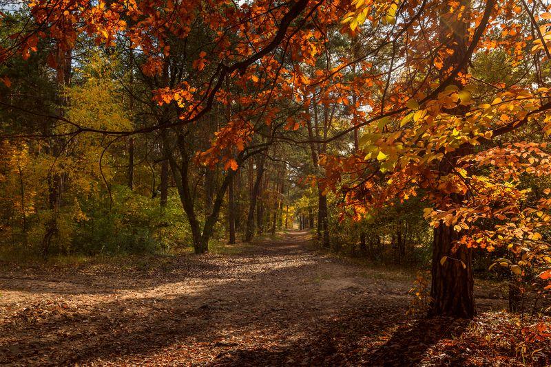 лес осень октябрь солнце туман клён дуб Природы пышное убранствоphoto preview