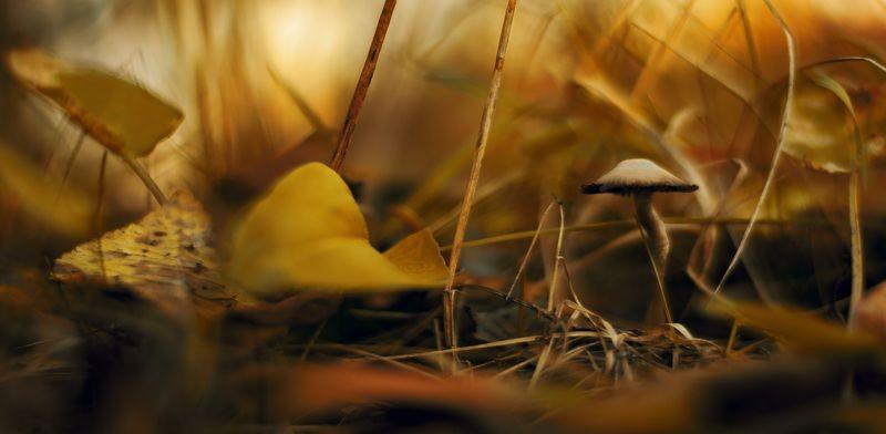 осень, природа, беларусь, лес Картинки из осеннего леса 11.photo preview
