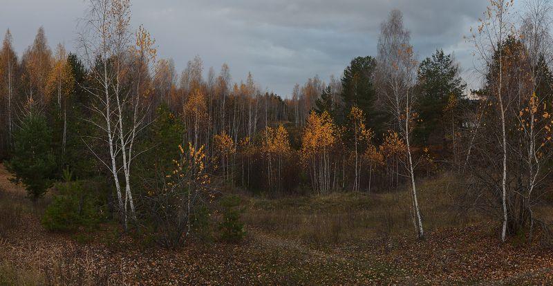 октябрь, холодный вечер, пасмурно, березки, желтые листья Перед первым снегомphoto preview
