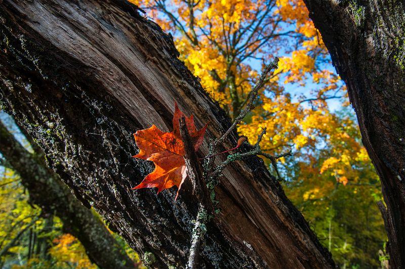 лист,осенние цвета Октябръ уходитphoto preview