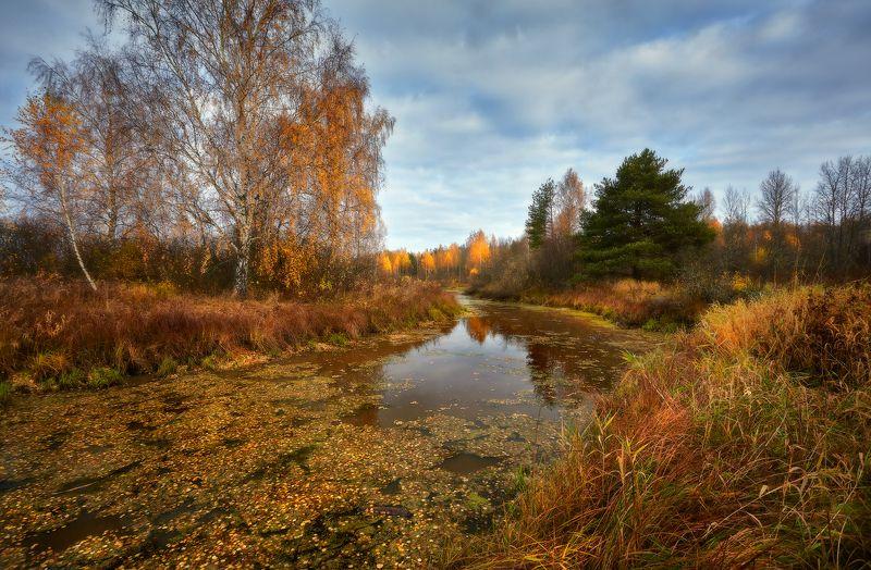 Осень-золотоносица...photo preview