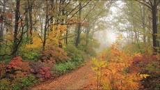 Осень красит  своим цветом.