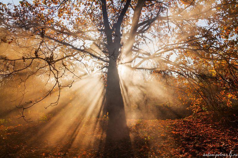 рассвет, туман, лес, осень У старого дубаphoto preview