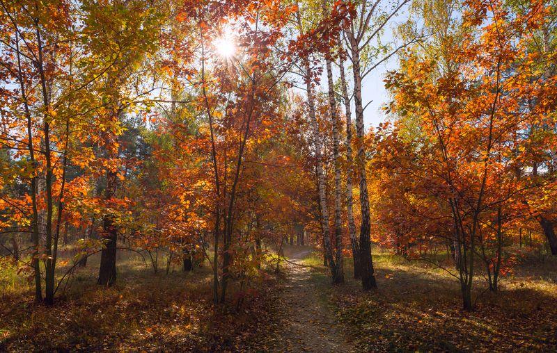 лес, осень, октябрь, тропа, роща, дубы, солнце Заглянула осень в рощуphoto preview