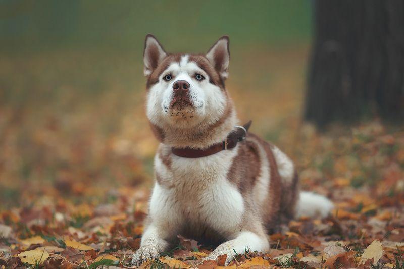 пушкин, царскоесело, царское, собаки, животные, осень, пёс, собака Осень Скаяphoto preview