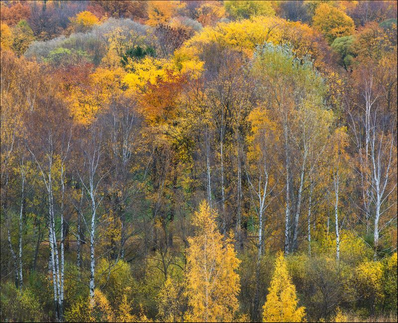 Осень Перед окнами осень.photo preview