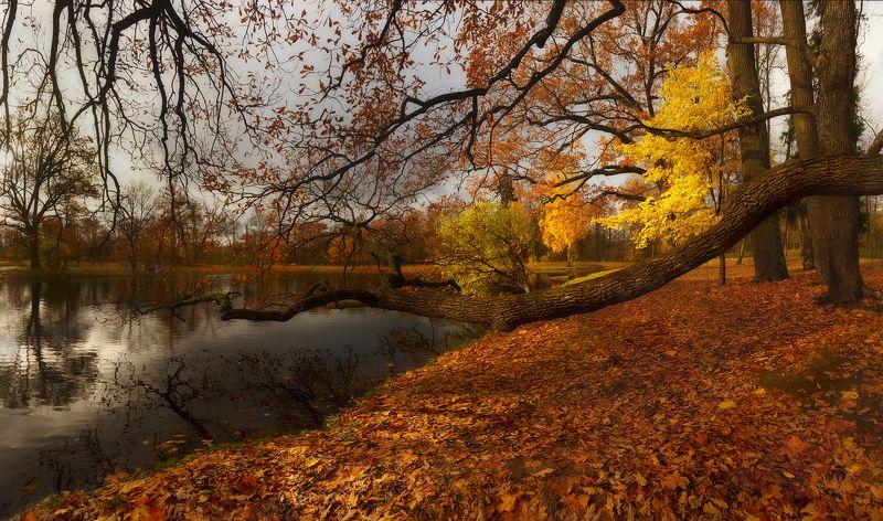 питер, пушкин, царскоесело, царское, осень, александровский, природа, landscape Свет октября...photo preview