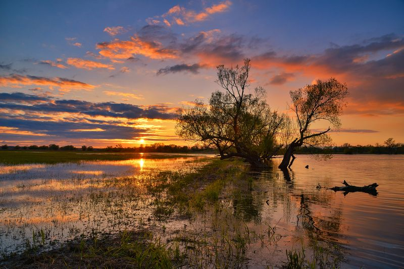 заводи sunset over backwaters water sky tree sun grass clouds nature color lake Sunset over the backwatersphoto preview