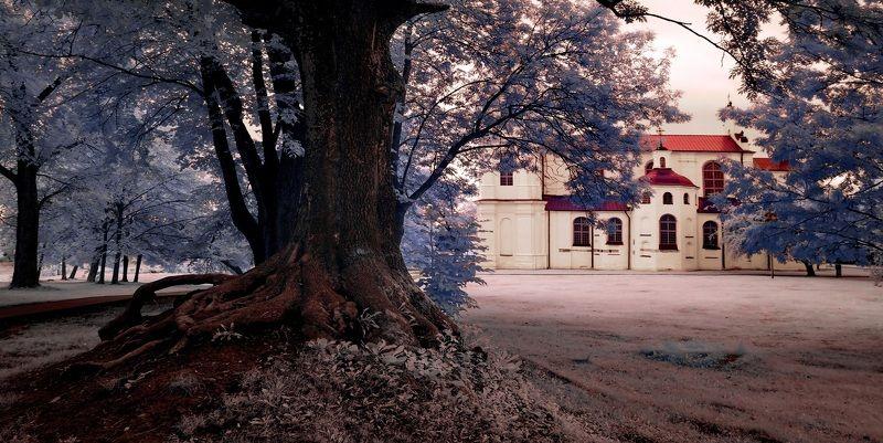 infrared, ик-фото, инфракрасное фото, инфракрасная фотография, город, пейзаж, лето,полоцк, беларусь Корни 2. Инфракрасная фотография.photo preview
