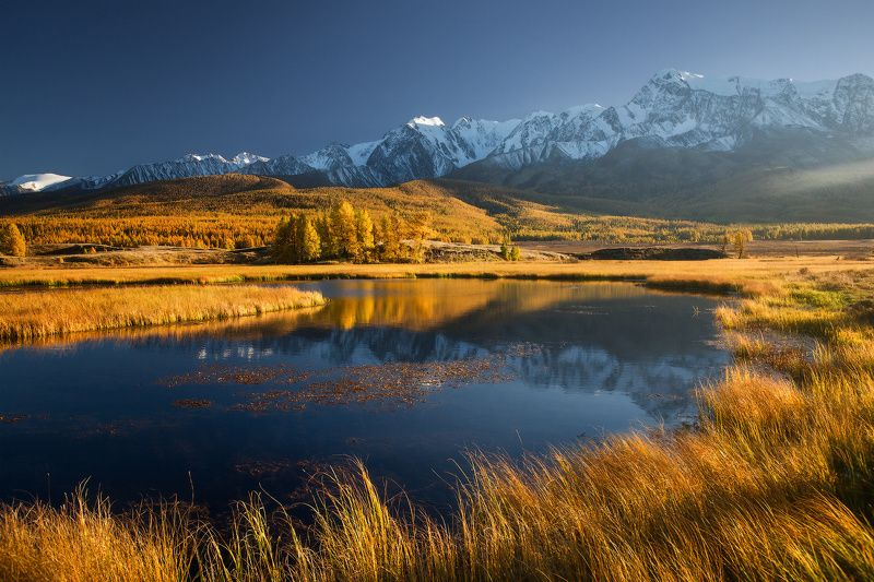 алтай, джангысколь, горы, осень, куркурек Купаясь в светеphoto preview