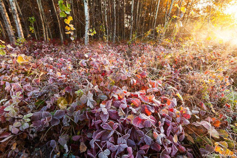 рассвет, туман, река, иней, осень Дыхание морозаphoto preview
