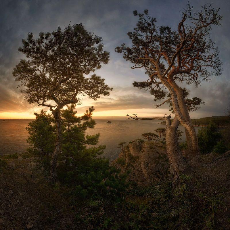 приморский край, заповедник, рассвет, море, солнце Реликтовые сосныphoto preview