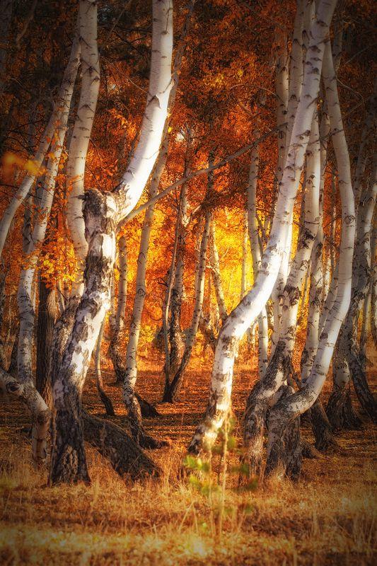 Лес кривых берёзphoto preview