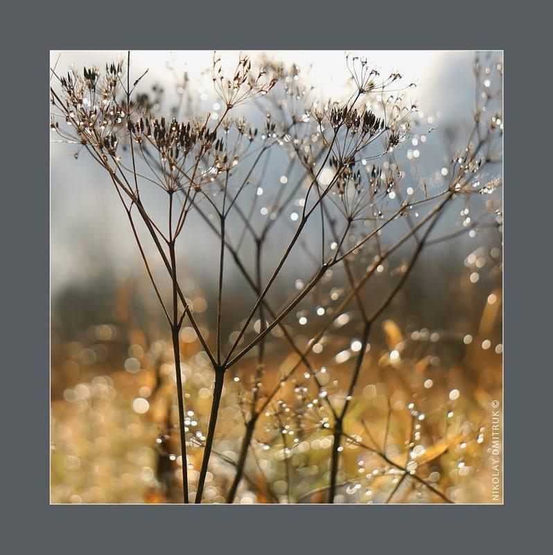 пейзаж, , природа, музыка лесной укроп. окт. 2017photo preview