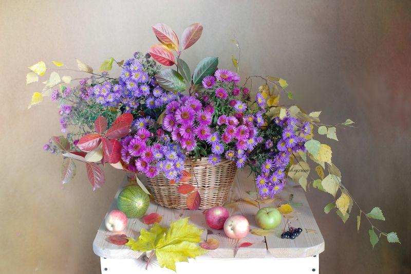 сентябринки , осень ,цветы, вера павлухина , С сентябринамиphoto preview