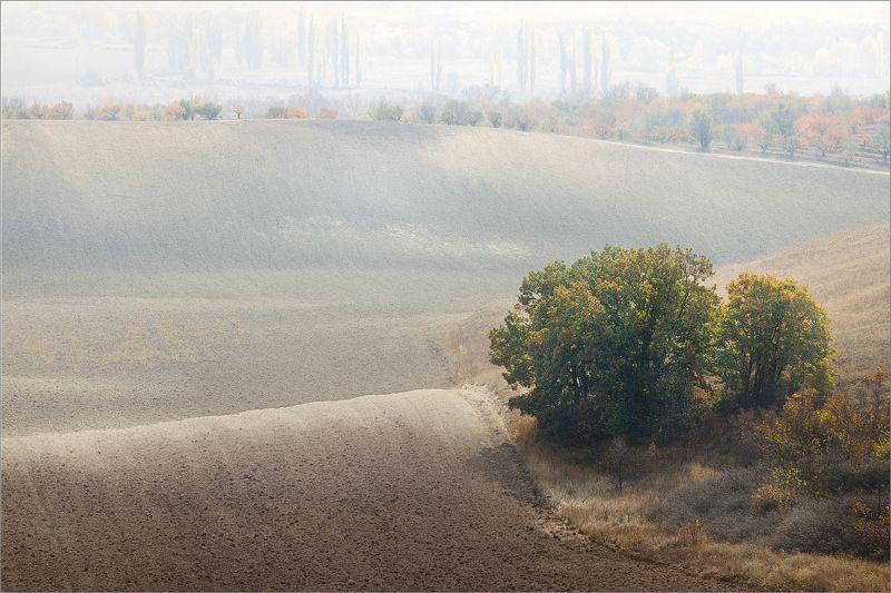 крым, поле, осень, деревья ***photo preview