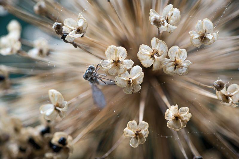 природа, макро, стрекоза, лук гигантский, паутина, капли дождя, Маленькая дневная музыкаphoto preview