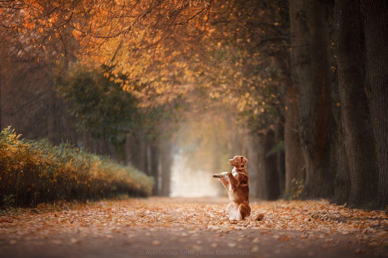собака, природа, осень Наша осеньphoto preview