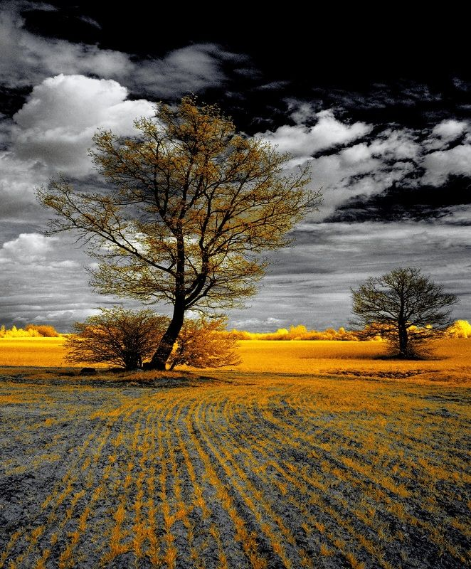 infrared,ик-фото,инфракрасное фото,инфракрасная фотография,пейзаж,природа,беларусь,весна Немного о весенних деревьях. Инфракрасная фотография.photo preview