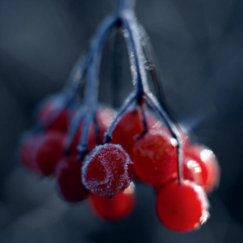 природа,осень,беларусь,лес Осенняя заморозка.photo preview