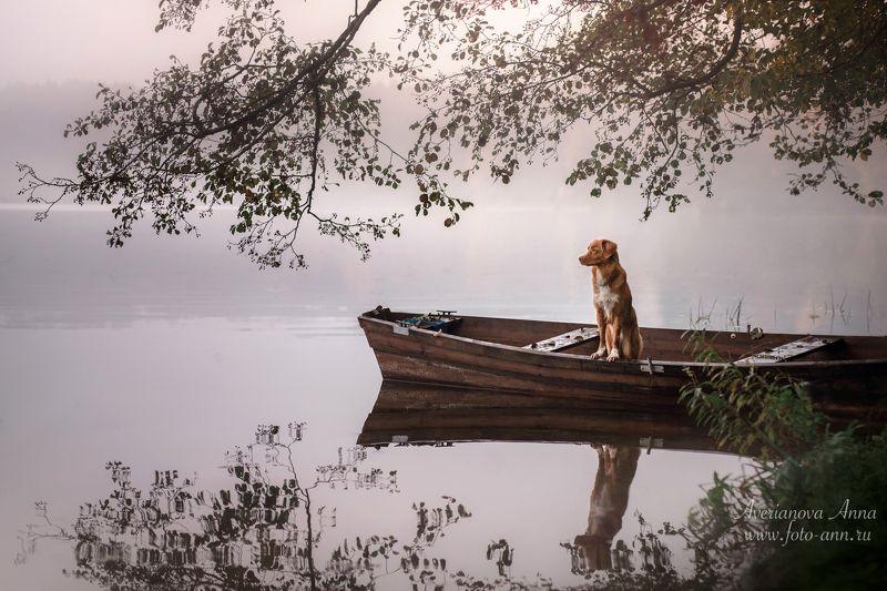 собака, природа, лодка на озереphoto preview